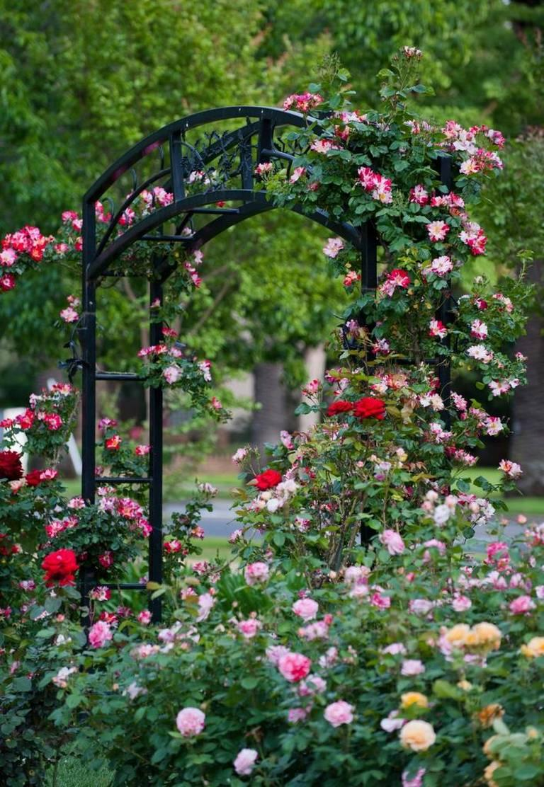 Natomas Rose Garden And Mckinley Park Pruning St Hope